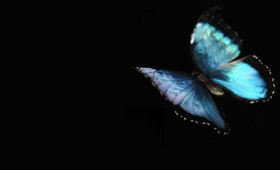Δείτε πώς πετάει μια πεταλούδα για πρώτη φορά (vid)
