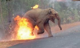 Το… κάψιμο ελεφάντων κέρδισε το πρώτο βραβείο!