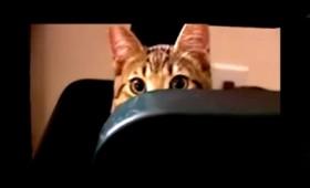 Γίνετε διάσημοι τραγουδώντας στη γάτα σας (vid)