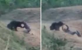 Vid: Η αρκούδα αρνήθηκε να βγάλει selfie και τον έφαγε