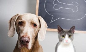 Γάτες vs σκύλων: Ποιος είναι πιο έξυπνος; (vid)
