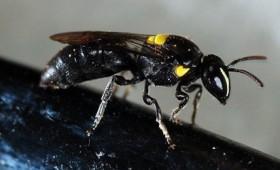 Μια μέλισσα μπορεί να σταματήσει τα πλαστικά