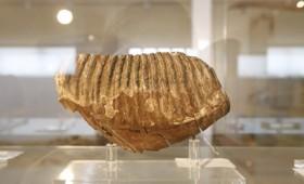 Ταξιδεύοντας 500 εκατομμύρια χρόνια πίσω στο παρελθόν