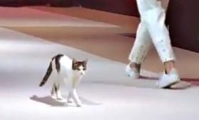 Γατούλα κάνει πασαρέλα σε επίδειξη μόδας! (vid)