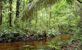 Γιατί τα κουνούπια ωφελούν τον άνθρωπο και το περιβάλλον (vid)