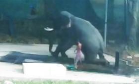 Χτύπησε τον ελέφαντα κι εκείνος κάθισε πάνω του (vid)