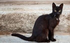 Γάτα χτυπά το ρόπτρο για να μπει μέσα στο σπίτι (vid)