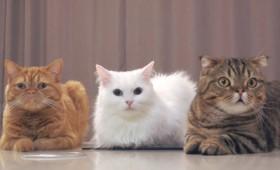 Οι γάτες μπορούν να αναγνωρίσουν το όνομά τους