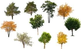 Θες να αποφοιτήσεις από το σχολείο; Φύτεψε 10 δέντρα!