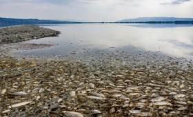 Η λίμνη Κορώνεια μάχεται για την επιβίωσή της (vid)