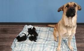 Αδέσποτη σκυλίτσα έσωσε από βέβαιο θάνατο πέντε νεογέννητα γατάκια