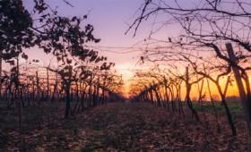 Απειλή για το κρασί η κλιματική αλλαγή (vid)