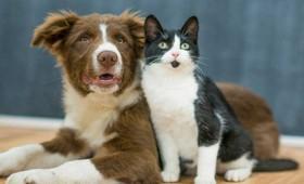 Ο κοροναϊός προσβάλλει πιο εύκολα τις γάτες απ' ότι τους σκύλους