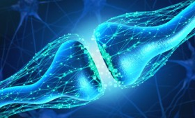 Τεχνητή σύναψη επικοινωνεί με ζωντανά κύτταρα (vid)