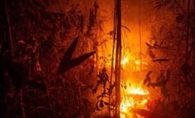 Αμαζόνιος: Τα πνευμόνια της Γης καίγονται για άλλη μια φορά (vid)