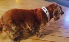 Η σκυλίτσα του Charlie Hebdo που έσωσε κόσμο (vid)