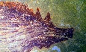 Ανακαλύφθηκε η αρχαιότερη σπηλαιογραφία ζώου (vid)