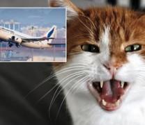 Γάτα κάνει αεροπειρατεία σε αεροπλάνο του Σουδάν