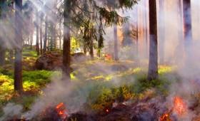 Πενήντα επτά πυρκαγιές σε ένα 24ωρο σε όλη τη χώρα