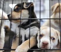 Η παράνοια στο κόκκινο! Σκοτώνουν σκύλους για να μην μεταδώσουν Covid