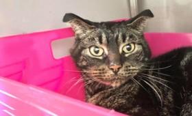 Γάτα κλειδωμένη για δύο μήνες σε άδειο σπίτι κατάφερε και επιβίωσε