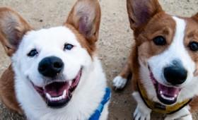 Τα σκυλιά καταλαβαίνουν αν κάποιος τους λέει ψέματα