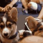 Puppy's power! Χαρούμενα κουτάβια εν δράσει (βίντεο)