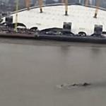 Μυστηριώδες πλάσμα στον ποταμό Τάμεση (βίντεο)