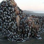 Μυστηριώδες πλάσμα σε ακτή της Νέας Ζηλανδίας