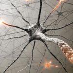 Δημιουργία εγκεφαλικού νευρώνα… made in Greece