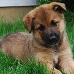 Αλέξανδρος Ηλιάδης: Ο άγιος προστάτης των σκύλων