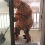 Τι συμβαίνει όταν ντύνεσαι Τυραννόσαυρος Ρεξ
