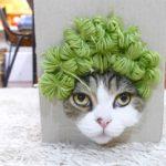 Μαρού: Όταν οι γάτες κάνουν μόντελινγκ (βίντεο)