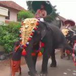 Ιερός ελέφαντας κλωτσάει στο στήθος ασεβή (vid)