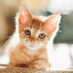 Οι γάτες εξημερώθηκαν πριν από 9.000 χρόνια