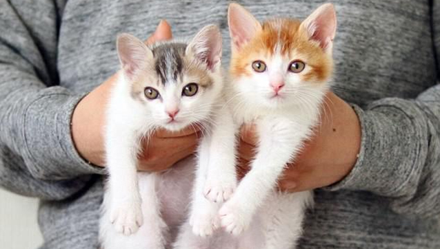 Ο Rie Tamura λέει ότι τα γατάκια συμπεριφέρονται καλά και αγαπάνε το ένα το  άλλο – αν και μερικές φορές είναι άτακτα. d1d137ad0a7