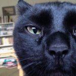 Γάτα χωρισμένου ζεύγους ύποπτη κατασκοπείας