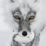 2017: Οι καλύτερες φωτογραφίες άγριας ζωής