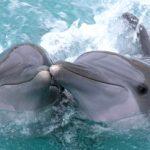 Τα δελφίνια έχουν ανθρώπινα χαρακτηριστικά γνωρίσματα