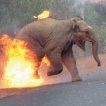 Το κάψιμο ελεφάντων κέρδισε το πρώτο βραβείο