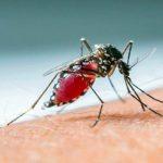 Στους 11 οι νεκροί από τον ιό του Δυτικού Νείλου (vid)