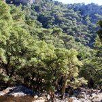 Απαγόρευση κυκλοφορίας σε δάση και ευπαθείς περιοχές