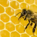 Οι μέλισσες μπορούν και λύνουν μαθηματικά προβλήματα (vid)