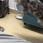 Η αστεία αντίδραση μιας γάτας με το μικρό της (vid)