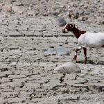 Η ερημοποίηση της Ελλάδας μεταφέρεται και στο έδαφος