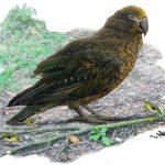 «Ηρακλής ο απρόσμενος», ο μεγαλύτερος παπαγάλος που υπήρξε ποτέ στη Γη (vid)