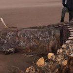 Σκελετός τύπου Νέσι βρέθηκε σε παραλία της Σκωτίας