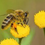 Δύσκολη η φετινή χρονιά για τη μελισσοκομία
