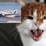 Γατούλα κάνει αεροπειρατεία σε αεροπλάνο του Σουδάν