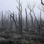 Τα δέντρα κάηκαν, έρχονται πλημμύρες, σε λίγο δεν θα υπάρχουν σωσίβια (vid)